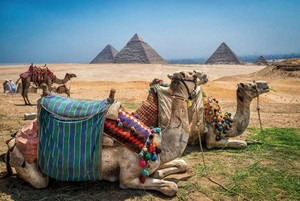 CAMEL IN PYRAMIDS OF GIZA EGYPT