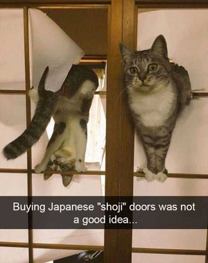 CATS HUMOR FUNNY