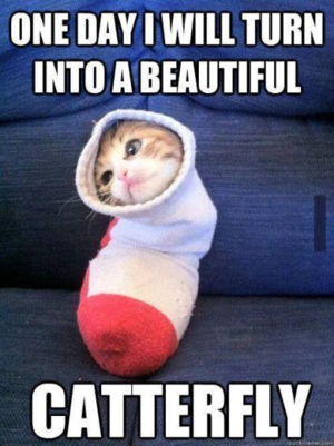 Cute Sock Cat