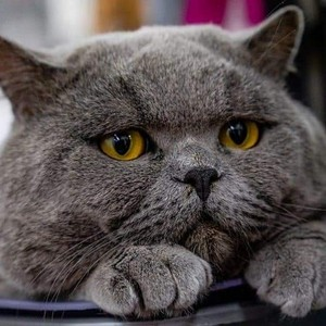 El gato gris (Gray cat)