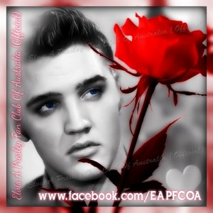 Elvis 팬 creation