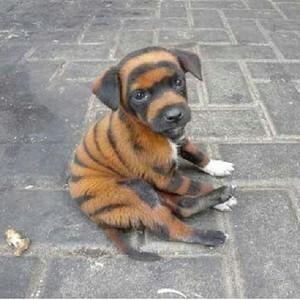 fur, manyoya Ever Marafiki