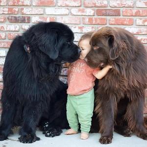 Furry vrienden