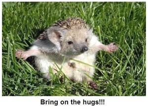 Hedgehog Hugs