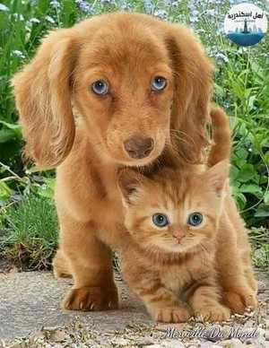 chatons AND chiens