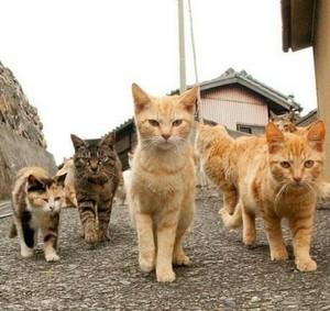 anak kucing Kucing