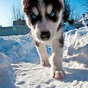 perrito, cachorro amor