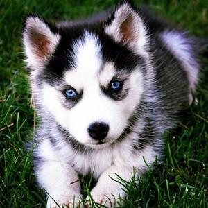 cachorro, filhote de cachorro amor
