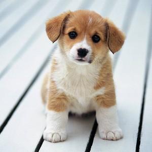 小狗 爱情