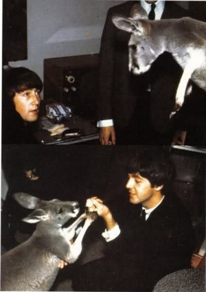 The Beatles New Pets?