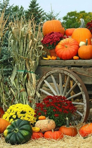 beautiful autumn🎃🧡🍁
