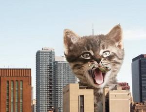 Кошки yeah!🤣