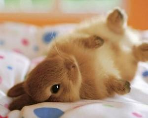 cute bunnies🐰❤️🌸