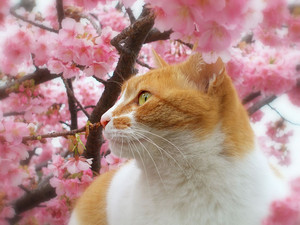 cherry Blossom Cat 🦋