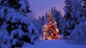 Рождество forest