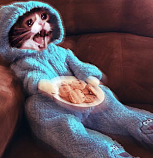 Cookie Monster Cat