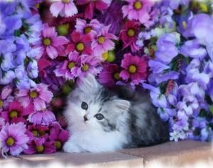 angan-angan Kitty 🦋