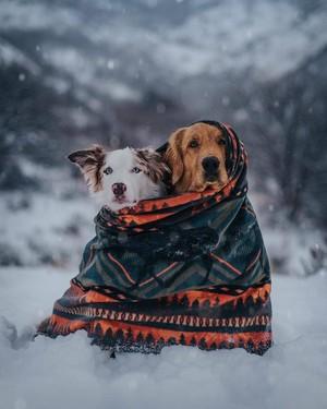 Fur Ever Friends