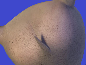 Gloria's big SEXY hippo booty