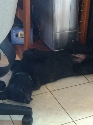 How Hansel Sleeps