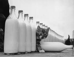 susu For Kitty