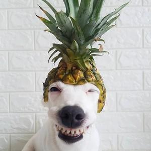 anak anjing, anjing cinta