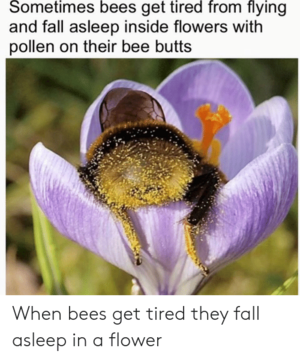 When bees get tired