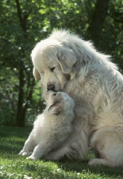 cute dog with puppy🐶