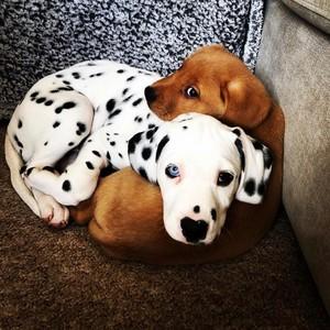 cute puppies🐶