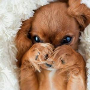 cute puppy🐶
