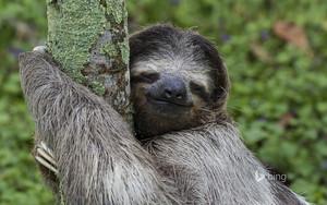 sloths ❤