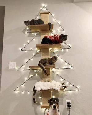 the best Xmas tree!!