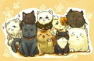 Cat Nations