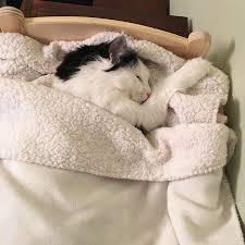 Catnapping In 床, 床上