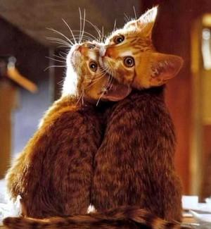 Cute Cat 💜