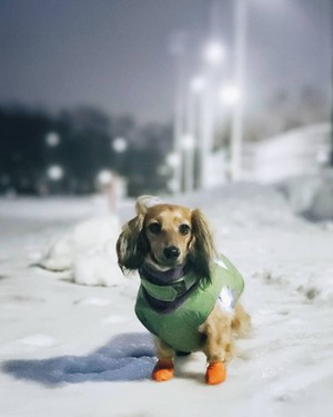 Doggie Pals
