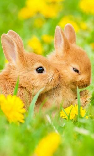 Easter bunnies🐇🐣🙏🌷