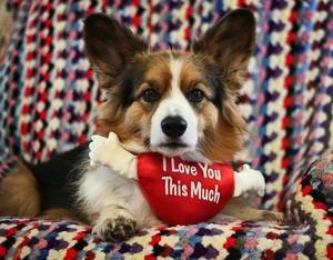 Happy Valentine's ngày Lovely Sunny 💞