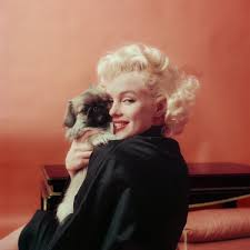 Marilyn And Her কুকুরছানা