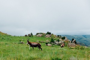 Mhlambanyatsi, Eswatini