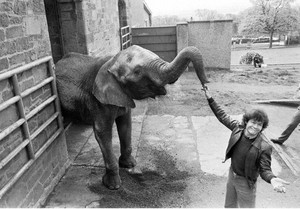 Micky's Elephant!?