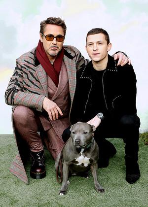 Robert Downey Jr., Tom Holland, Tessa - 'Dolittle' special screening in London, England