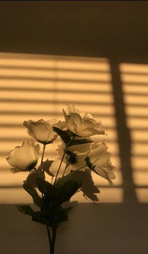 Some Sunshine and Joy 💛