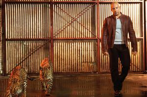 Vin Diesel - Prestige Photoshoot - 2013