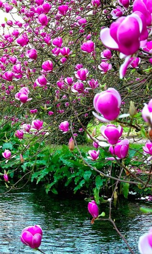 beautiful spring🌺