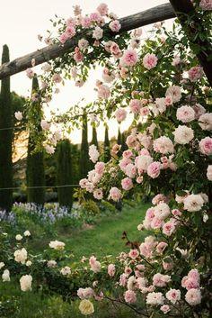 beautiful spring🌷