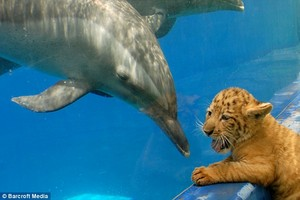 dolphins, sloths and tigres