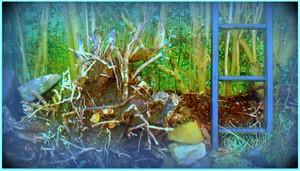 my old garden ideas