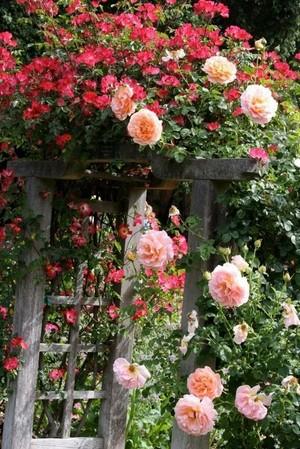 paradisial garden 🌷🌻🌹🌸