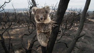 Australia Wildfire Fund Needs Your Help - Info in टिप्पणियाँ